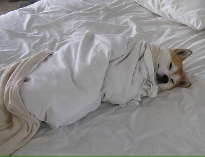 dog_sleep1