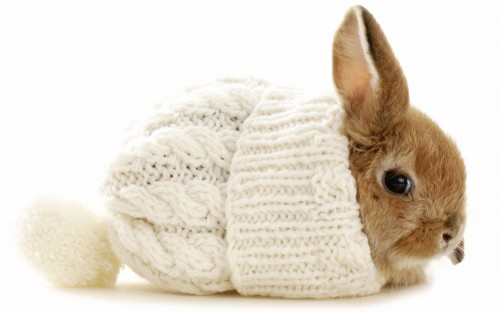 winter_hat_rabbit_72597_2560x1600