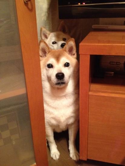 1204youkai_dog1