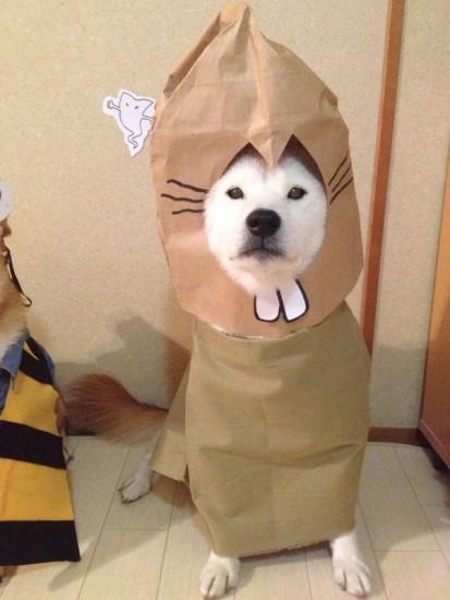 1204youkai_dog5