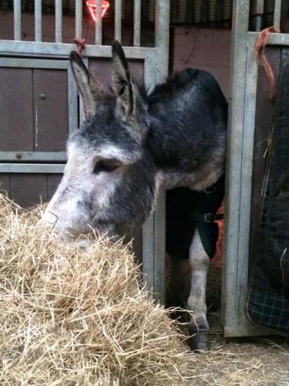 1210rescued_donkey1