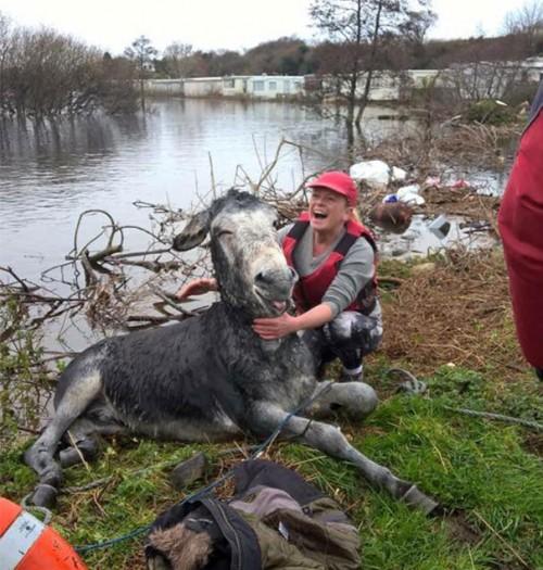 1210rescued_donkey6