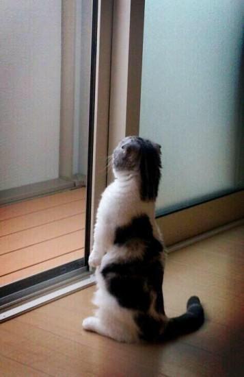 1211akubi_cat12