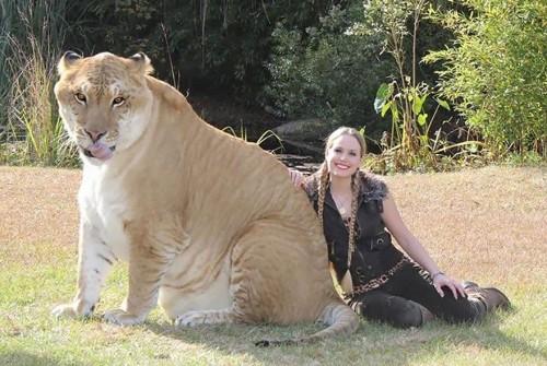 1218hybrid_animals17