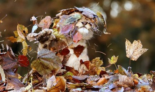 1223lion_leaves1