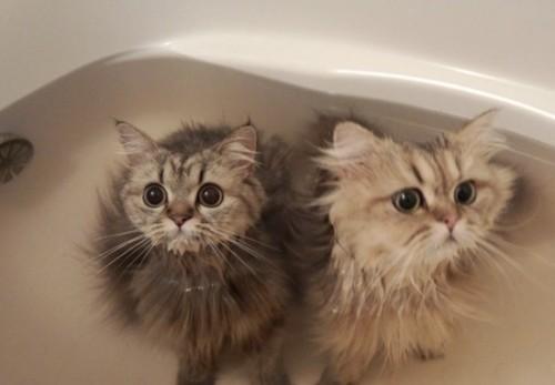 bathcats (2)