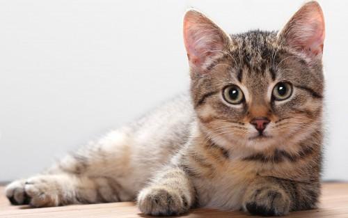 cat_bigmac1