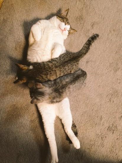 kokonya_cat (7)