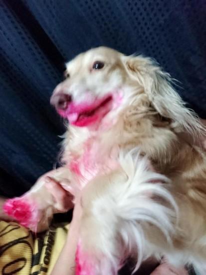 ripdog (2)