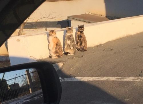 staningcat (2)