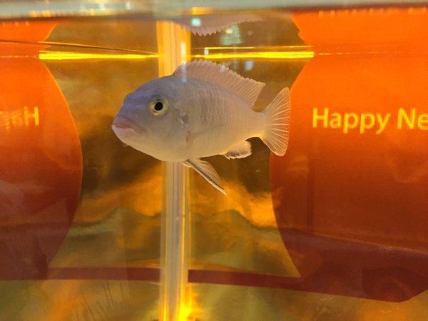 01018big_dr_fish4