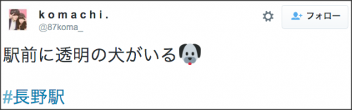 0104nagano_toumei_dog1
