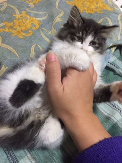 0104uekibachi_cat6
