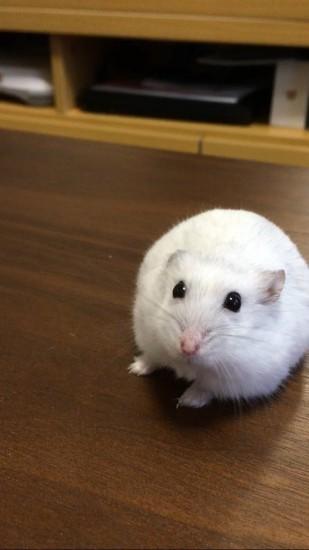 0105kagamimochi_mouse1