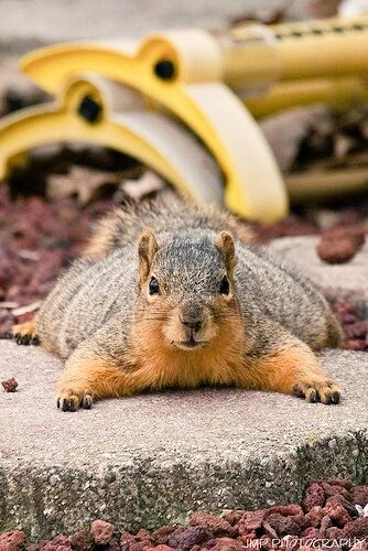 0113fat_squirrel1