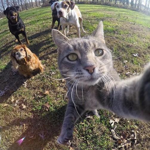 selfiecat (1)