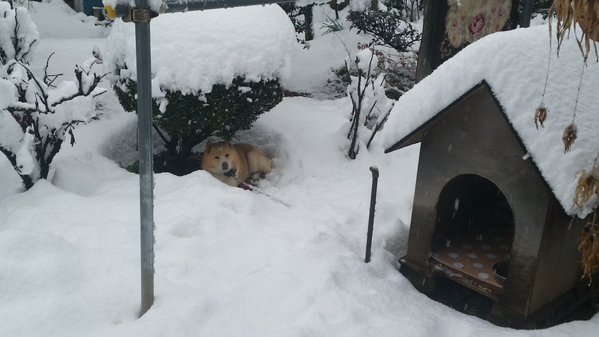 snow_tokyo (1)