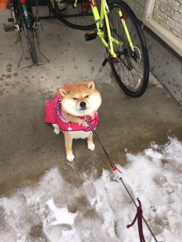 snow_tokyo (13)