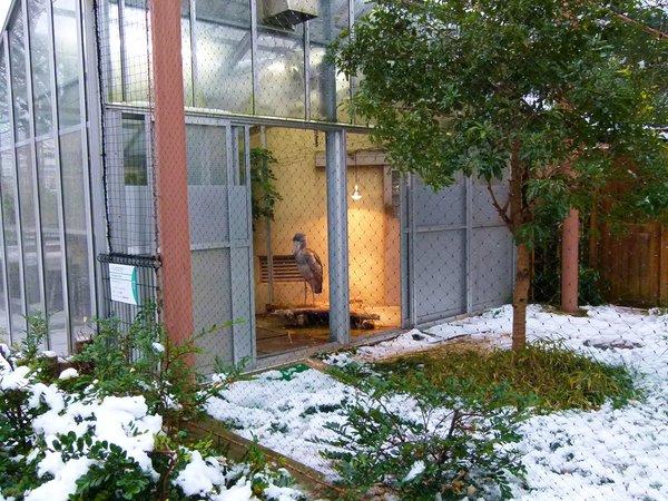 snow_tokyo (15)