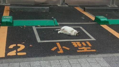 happycat (10)