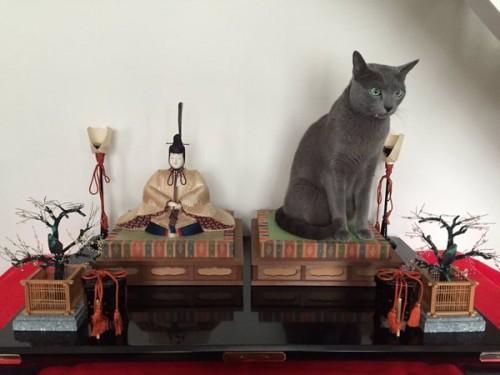happycat (11)