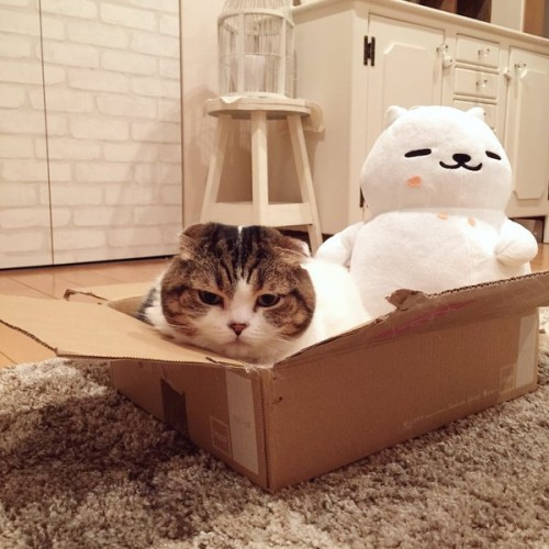 happycat (13)