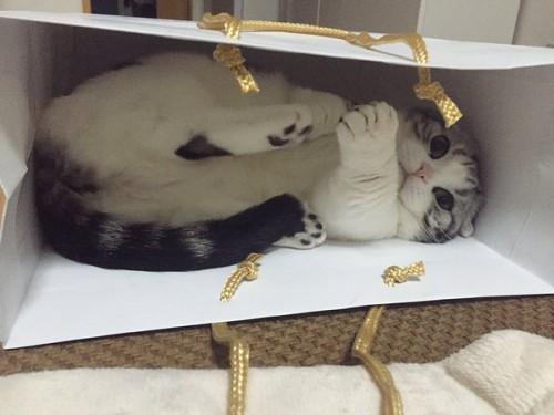happycat (16)