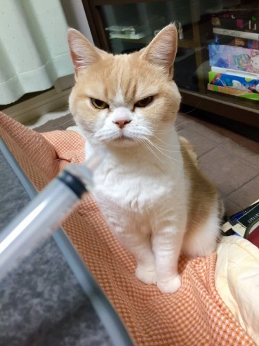 happycat (17)