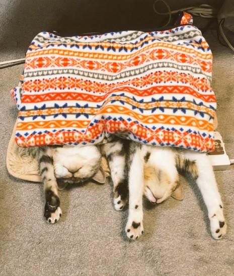 hotcarpet_cats (3)
