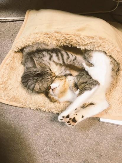 hotcarpet_cats (6)