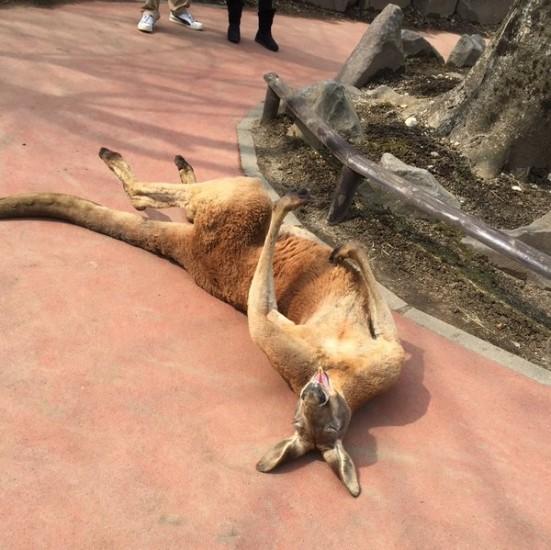 kangaroo_stove (4)