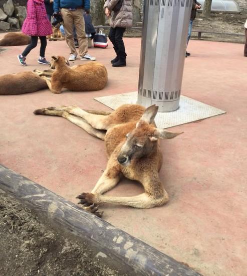 kangaroo_stove (5)