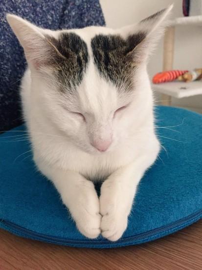 lovelycat (17)