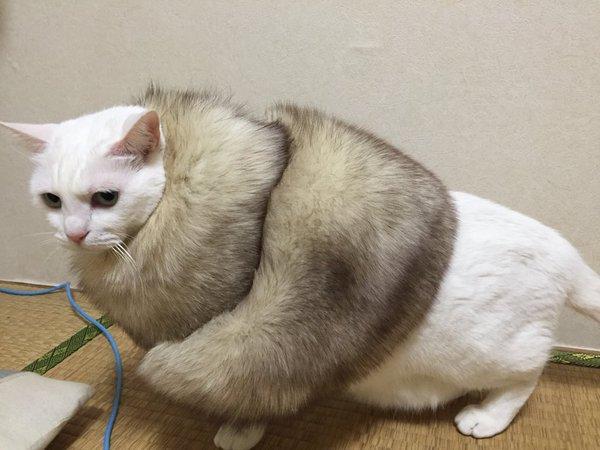 lovelycat (18)