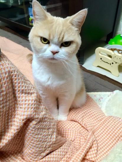 lovelycat (19)