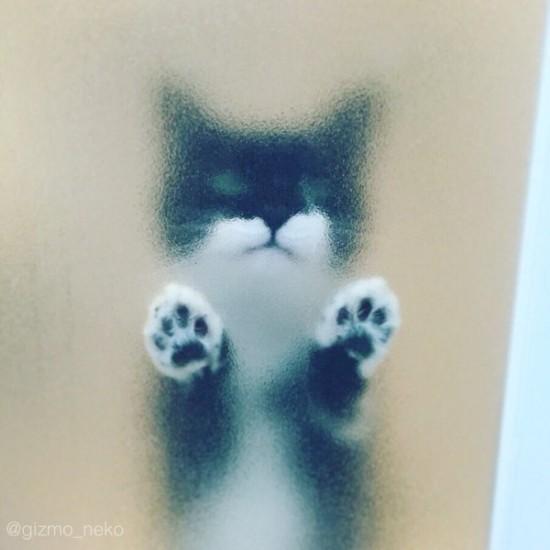 lovelycat (5)