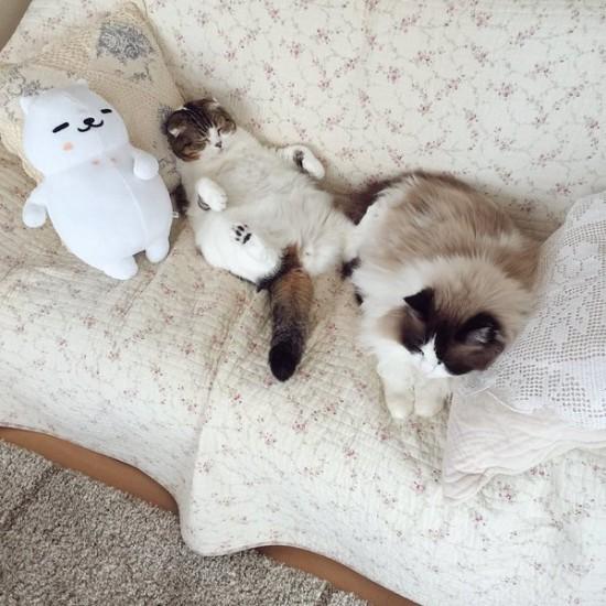 lovelycat (8)