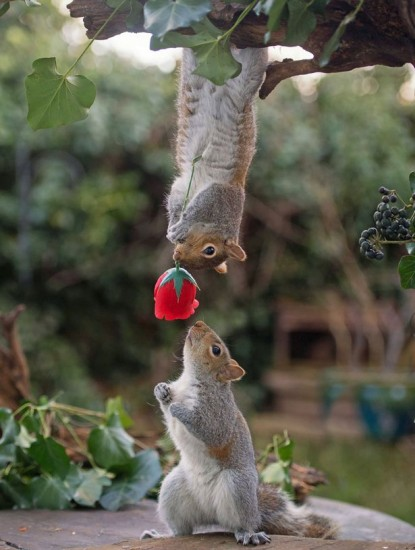 rose_squirrel (2)