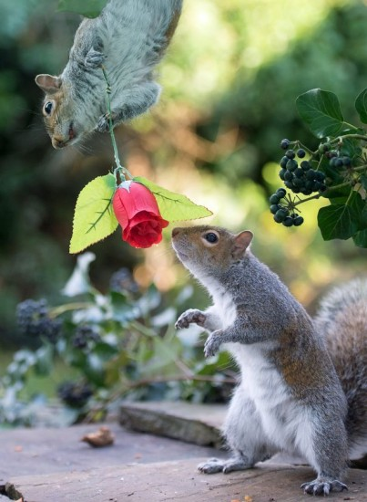 rose_squirrel (3)