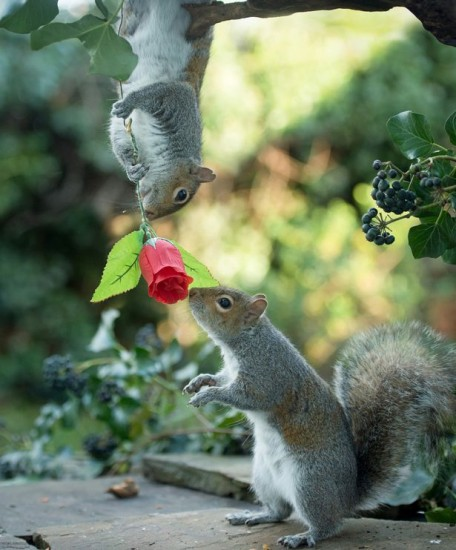 rose_squirrel (5)