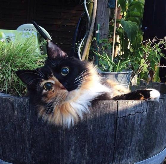Jasminecat (2)