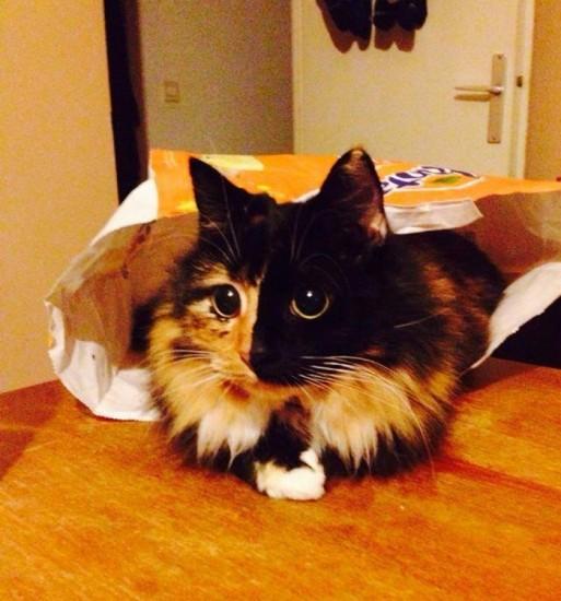 Jasminecat (3)