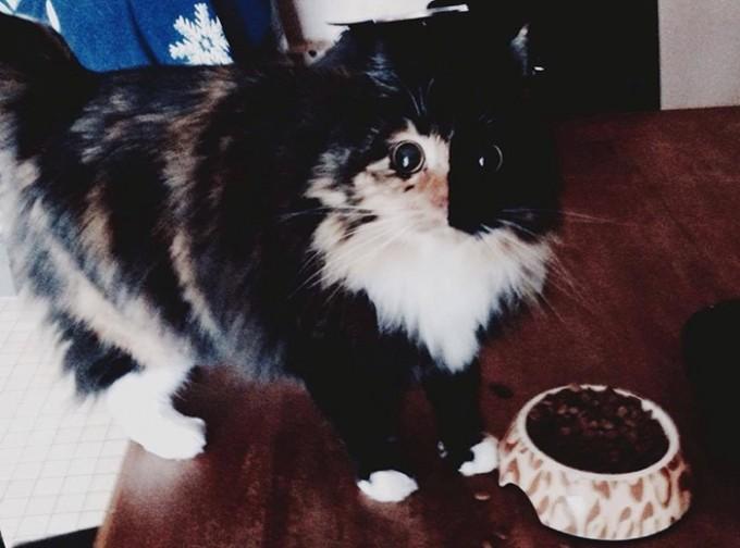 Jasminecat (4)