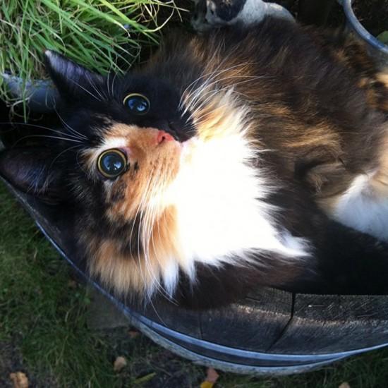Jasminecat (5)