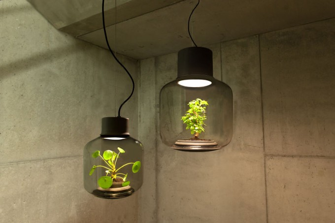 PlantsLamp (1)