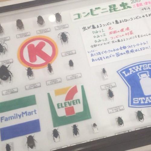 beetle_report_01