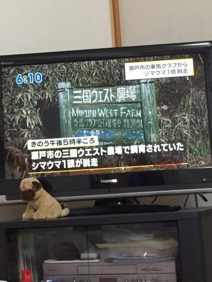 dassou_shimauma1