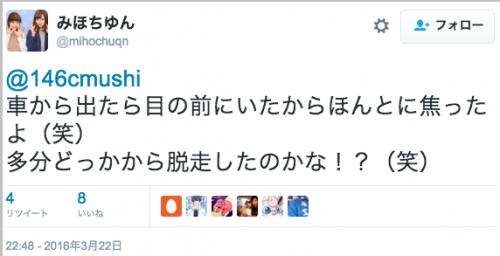 dassou_shimauma4