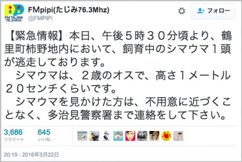 dassou_shimauma7
