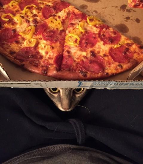 funny_sittingcat (1)